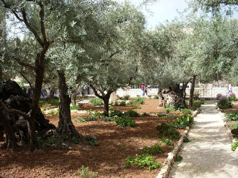 Day 5 Temple Mount Garden of Gethsemane Garden Tomb Biblos