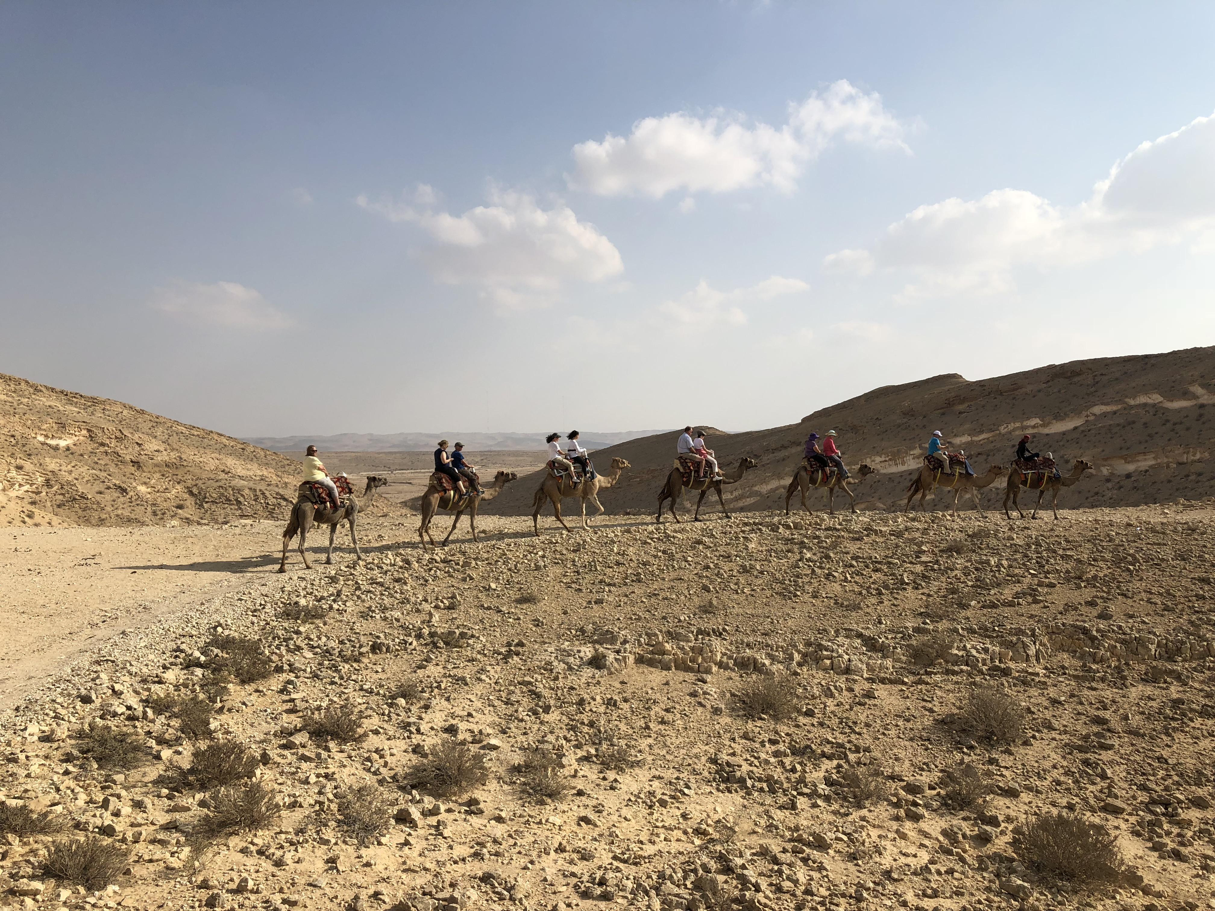 Camel farm_9